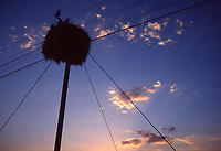 Natura in Namibia: nido su un palo al tramonto