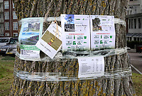 Nederland - Hoorn- 2020.    Bomenkap Westerdijk.  Ondanks vele protesten wil de gemeente 13 Canadese populieren kappen.  Foto ANP / HH / Berlinda van Dam