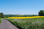 Wiltshire, England. Country road with wild flowers and rape seed fields in flower.