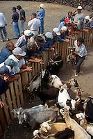 Spanien, Kanarische Inseln, Fuerteventura, Viehauftrieb in Pozo Negro