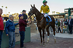 ARCADIA, CA JANUARY 21: #3 Vasilika, ridden by Flavien Prat, in the winners circle after winning Megahertz Stakes (Grade lll) on January 21, 2019 at Santa Anita Park in Arcadia, CA. (Photo by Casey Phillips/Eclipse Sportswire/CSM)