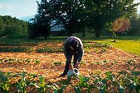 Man watering organic garden.