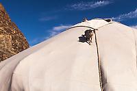 Asia Mongolia, Altai mountain,Saikhsai, mongolian ger with a cat