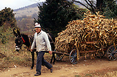 Bulgaria. Man leading donkey and a rickety old cart with maize straw.