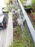 Vorne: Zitronenquendel und Zwergthymian, hinten: zwei Lavendel<br /> Europe, Germany, Ruhr Area, Wetter<br /> <br /> Europa, Deutschland, Ruhrgebiet, Wetter<br /> <br /> [MODEL RELEASE: NO, Copyright: Vera Schimetzek, Bornstrasse 5, 58300 Wetter, Germany, phone: 0049.2335.970650, mobil: 0049.151.21220918, www.schimetzek-foto.de, schimetzek@web.de,<br /> Die Verwendung des Fotos ist honorarpflichtig. Keine Verwendung ohne Genehmigung.  Es gelten die AGB.<br /> For use the general terms and conditions are mandatory. No use without permission. The use of the image is subject to a fee.]