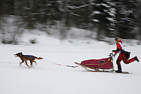 Sunday February 28, 2010   Emily Krol nears the finish line on Willow lake to finish in 9th place during the 2010 Junior Iditarod . Willow , AK