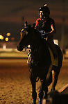 LOUISVILLE, KY - APRIL 19: Mo Tom (Uncle Mo x Caroni, by Rubiano) on the track in the early morning at Churchill Downs, Louisville KY. Owner G M B Racing, trainer Thomas A. Amoss. (Photo by Mary M. Meek/Eclipse Sportswire/Getty Images)