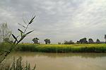 Ein Afek nature reserve