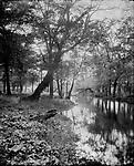 Frederick Stone negative. <br />Mt. Carmel Brook, October 3, 1907.