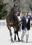 April 23, 2014: Mighty Nice and Phillip Dutton. during the first horse inspection at the Rolex Three Day Event in Lexington, KY at the Kentucky Horse Park.  Candice Chavez/ESW/CSM