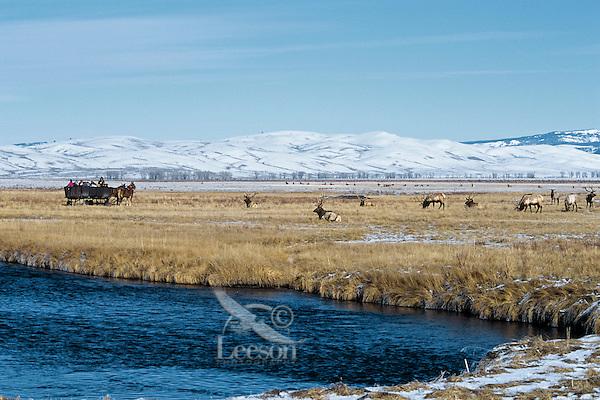 Viewing elk on the National Elk Refuge near Jackson, Wyoming. Winter