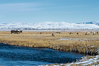 Viewing elk on the National Elk Refuge near Jackson, Wyoming. Winter