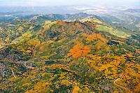 Aspens golden west of La Veta, Colorado