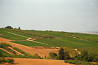Coulanges-la-Vineuse, a wine village in northern Burgundy, and a fruit orchard between the vineyards