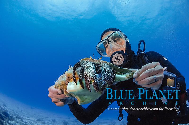 Scuba diver holding large hermit crab, Coenobita sp, Cozumel, Mexico, Caribbean, MR