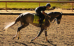 LOUISVILLE, KY - APRIL 20: Creator (Tapit x Morena, by Privately Held) gallops with exercise rider Abel Flores at Churchill Downs, Louisville KY. Owner WinStar Farm LLC, trainer Steven M. Asmussen. (Photo by Mary M. Meek/Eclipse Sportswire/Getty Images)
