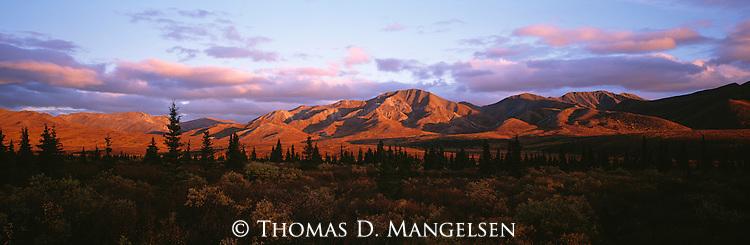 Conifers dot the landscape below a mountain range in Denali National Park, Alaska.