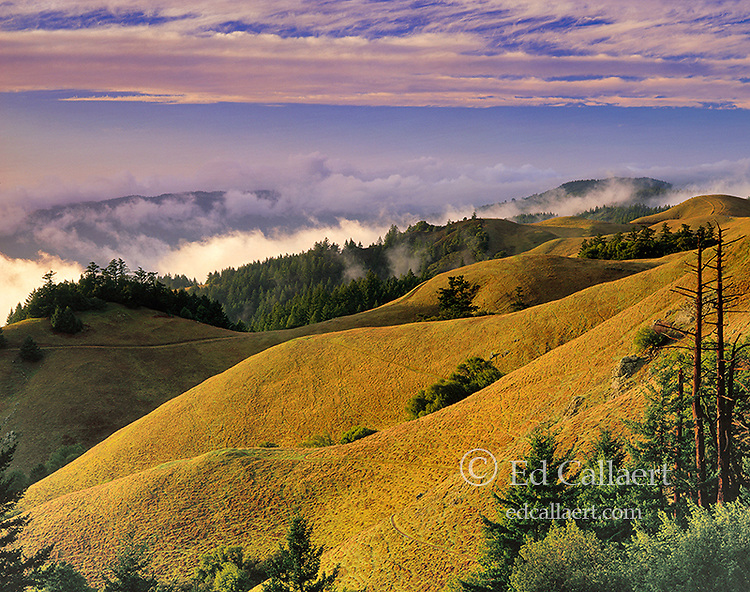 Clearing Storm, Bolinas Ridge, Mount Tamalpais State Park, Golden Gate National Recreation Area, Marin County, California