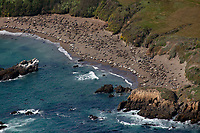 aerial photograph of elephant seals on a beach at the central california coast, San Luis Obispo County, California