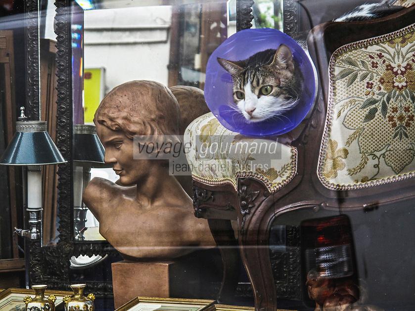 Europe/France/Ile de France/75011/Paris: Chat dans la vitrine d'un antiquaire Rue Oberkampf  // Europe / France / Ile de France / 75011 / Paris: Cat in the window of an antique dealer Rue Oberkampf