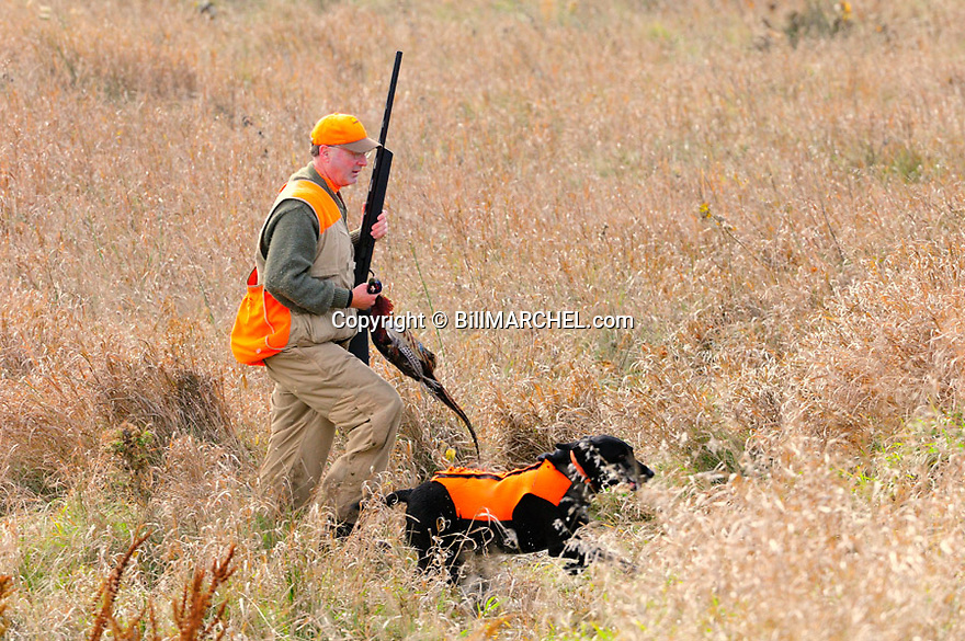 00890-044.09 Ring-necked Pheasant hunter with bagged bird and black Lab hunt ideal grassland cover.  CRP, prairie.