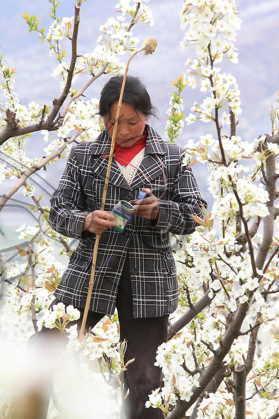 À la cime d'un arbre, une femme recharge son plumeau de pollen. ///At the top of a tree, a woman recharges her pollen feathers.