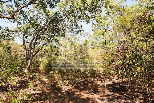 Xingu Indigenous Park, Mato Grosso, Brazil. Aldeia Matipu. Cerrado forest, paths divide through woodland.