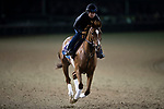 October 30, 2018 : Code of Honor, trained by Claude R. McGaughey III, exercises in preparation for the Breeders' Cup Juvenile at Churchill Downs on October 30, 2018 in Louisville, Kentucky. Michael McInally/Eclipse Sportswire/CSM