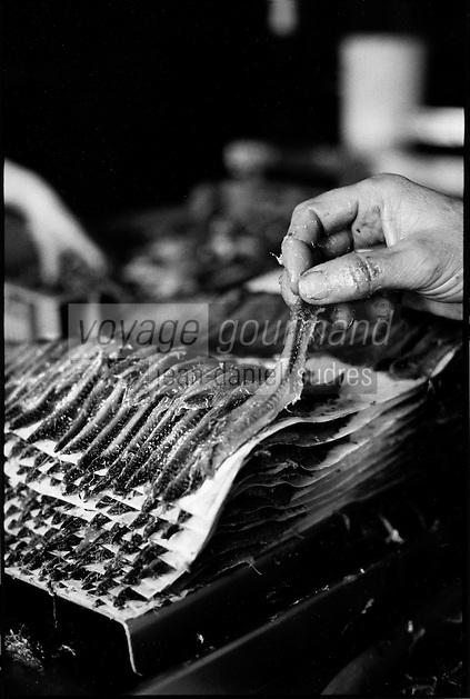 Europe/France/Languedoc-Roussillon/66/Pyrénées-Orientales/Collioure: prépartion des anchois de Collioure à la conserverie Roques [Non destiné à un usage publicitaire - Not intended for an advertising use]