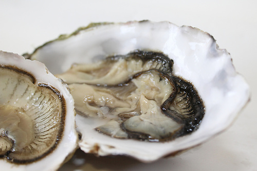 The new forecast system provides shellfish producers and official authorities with advance warning that allow them to take rapid mitigating measures to affected shellfish beds and, if necessary, post warnings in coastal areas where there is a direct health risk