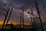 The Milky Way appears behind a row of dead pine trees along the coastline at Mashes Sands Beach in Wakulla County Florida.