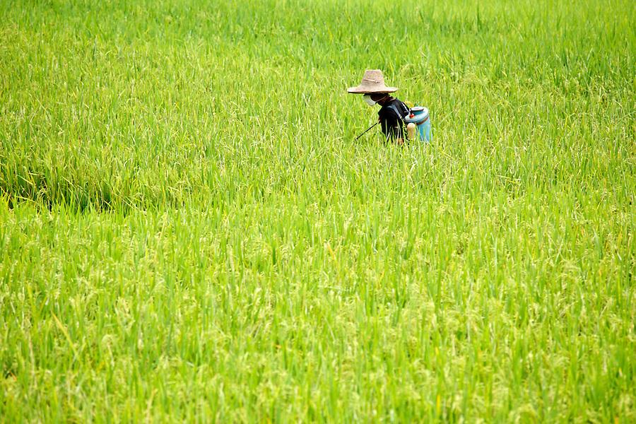 Chinese farmer spraying fields, Yulang River valley, Yangshuo, Guanxi, China