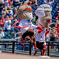 23 August 2018: Washington Nationals Mascot Teddy Roosevelt win the Presidents' Race between innings of a game against the Philadelphia Phillies at Nationals Park in Washington, DC. The Phillies shut out the Nationals 2-0 to take the 3rd game of their 3-game mid-week divisional series. Mandatory Credit: Ed Wolfstein Photo *** RAW (NEF) Image File Available ***