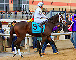 OZONE PARK, NY - NOVEMBER 26, 2016: Spirituality #9 in the post parade for the  Grade 2 Demoiselle Stakes for 2-year old fillies, at Aqueduct Racetrack . (Photo by Sue Kawczynski/Eclipse Sportswire/Getty Images)