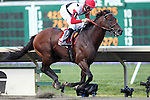 August 2, 2015. Bradester, Corey Lanerie up, wins the Grade II Monmouth Cup Stakes, one and 1/16 miles for three year olds and upward at Monmouth Park in Oceanport, NJ.  Eddie Kenneally trains; Joseph W. Sutton owns. Joan Fairman Kanes/ESW/CSM