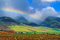 "A rainbow over the West Maui Mountains above Lahaina town, with freshly planted sugarcane in the foreground and mature cane fields on the slopes mid-frame. The ""L"" on the hillside stands for Lahainaluna High School."
