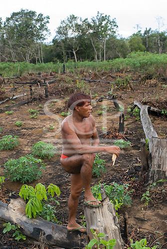 Xingu Indigenous Park, Mato Grosso State, Brazil. Aldeia Kamaiura. Crop plantation; manioc (cassava). Man with flute and body paint.