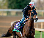 November 1, 2020: Channel Maker, trained by trainer William I. Mott, exercises in preparation for the Breeders' Cup Turf at Keeneland Racetrack in Lexington, Kentucky on November 1, 2020. Scott Serio/Eclipse Sportswire/Breeders Cup /CSM