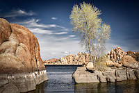 A lone cottonwood tree in spring foilage on a small island at Watson Lake in Prescott, Arizona