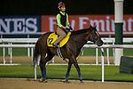 MEYDAN,DUBAI-MARCH 25: Harry's Son,trained by Paul Lafferty,exercises in preparation for the Dubai Turf at Meydan Racecourse on March 25,2016 in Meydan,Dubai (Photo by Kaz Ishida)