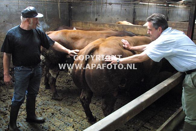 dodewaard 090701 slagewr pietman (r) zoekt een dikbil stier uit bij boerr van kleef (l)<br />foto frans ypma APA-foto