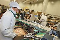 """- chickens breeding of """" Amadori """" group in Cesena, wrapping unit ....- allevamento di polli del gruppo """"Amadori"""" a Cesena, reparto confezione"""