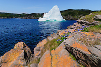 Iceberg floats in Trinity Bay off the Bonavista Peninsula of eastern Newfoundland, Newfoundland and Labrador, Canada. Blue Flag Iris flowers.