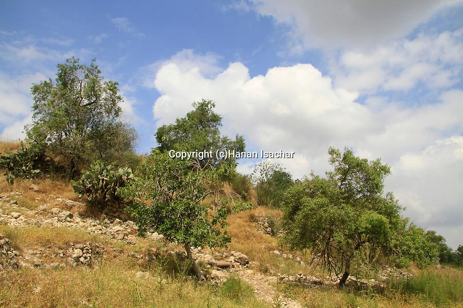 Israel, Jerusalem mountains, a Bustan in Bet Itab