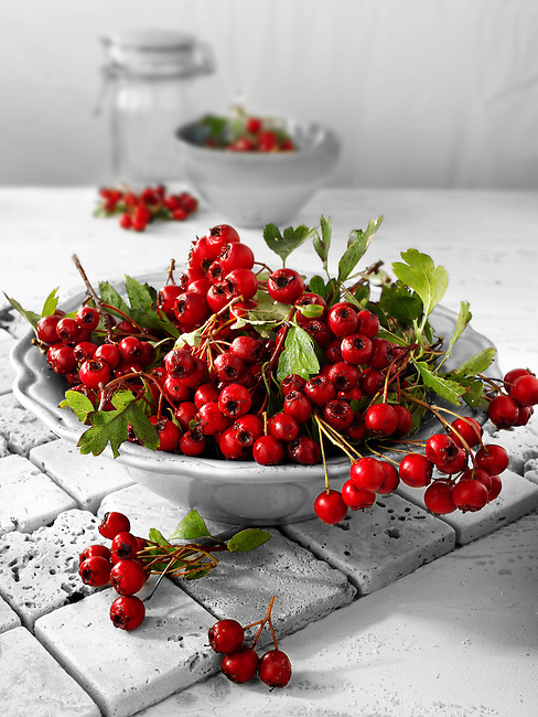 Fresh haws from the hawthorn bush