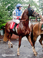 Moscow Cat with Keri Brion aboard before The International Ladies Fegentri Race at Delaware Park on 6/10/13