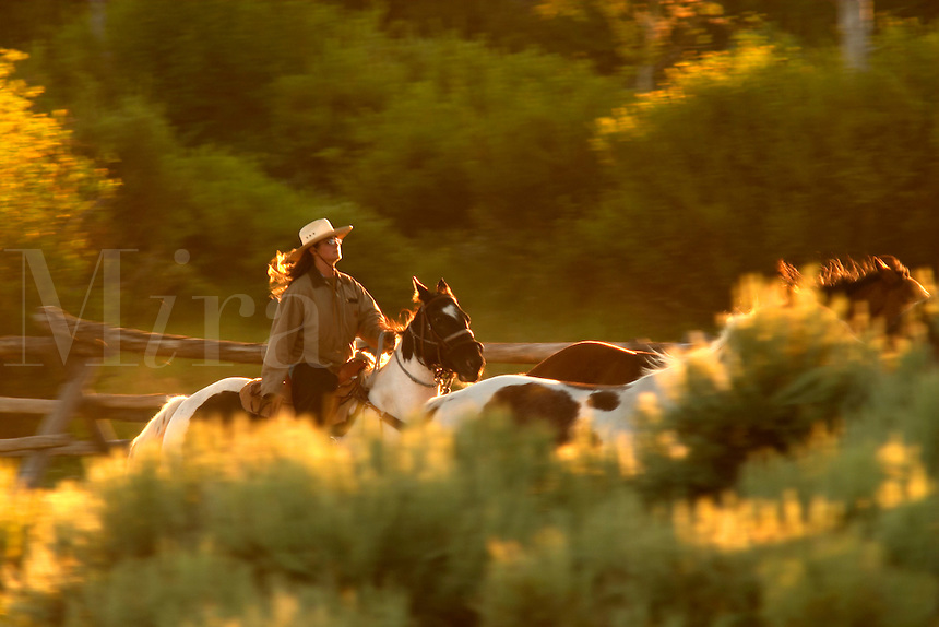 Woman on horseback rounding up horses, Triangle X Ranch, Grand Teton National Park, Teton County, Wyoming, USA