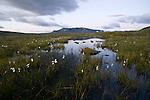 A mountain meadow in the Jotunheimen Nasjonalpark, Norway