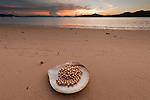 Jewelmer Pearlfarm, a Pinctada maxima shell full of golden pearls. A perfect one can catch up to 10.000 US$