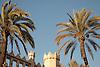 Palm trees, La Lonja in gothic style (1426-1447) by architect Guillermo Sagrera<br /> <br /> Palmeras, La Lonja (cat.: Sa Llotja) de estilo gótico (1426-1447) por el arquitecto Gullermo Sagrera<br /> <br /> Palmen, Handelsbörse La Lonja im gotischen Stil (1426-1447) von dem Architekten Guillermo Sagrera